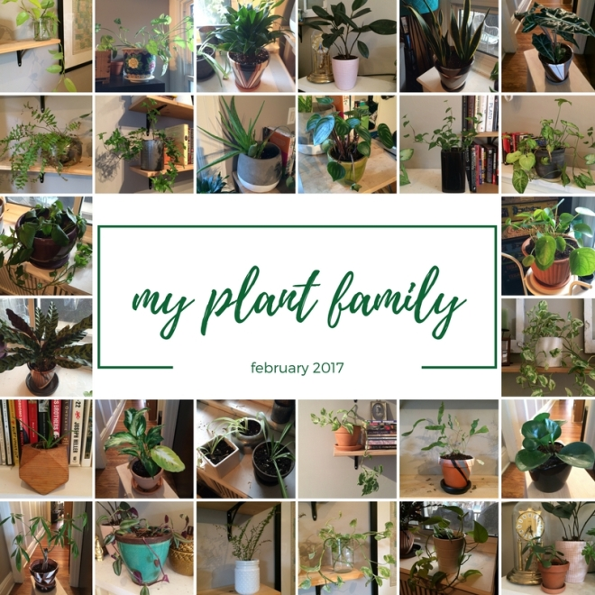 my-plant-family-1