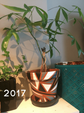 MoneyTree2017