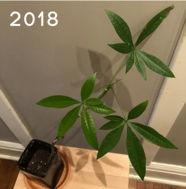MoneyTree2018